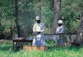bush-chefs