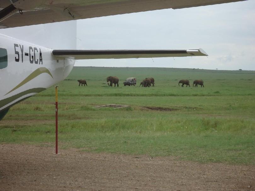 Elephants & plane