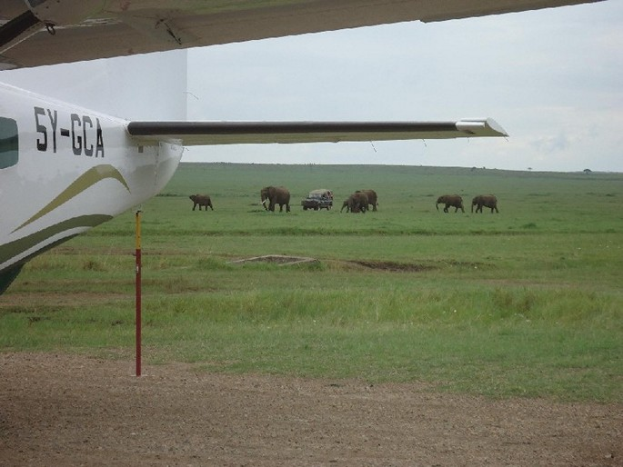 Elephants and Airplane