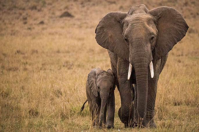Masai Mara 1