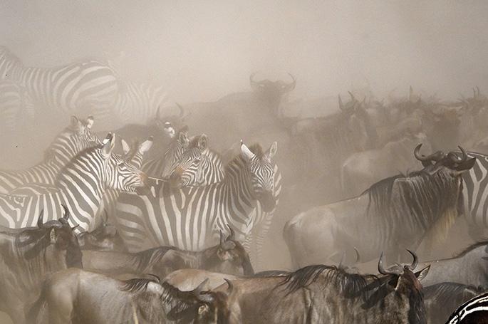 Masai Mara 3