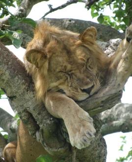 Lion_tree_final
