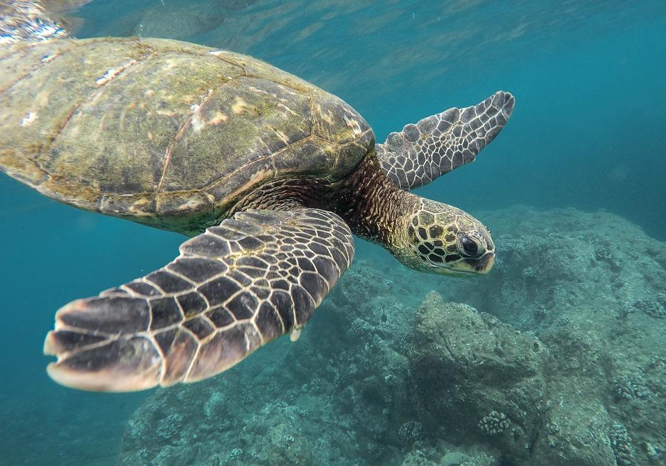 0 turtle