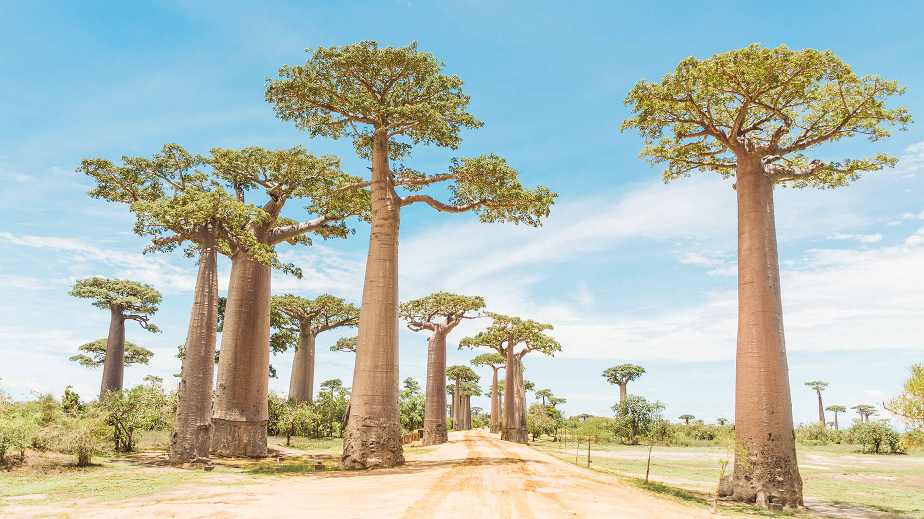 banner baobab c