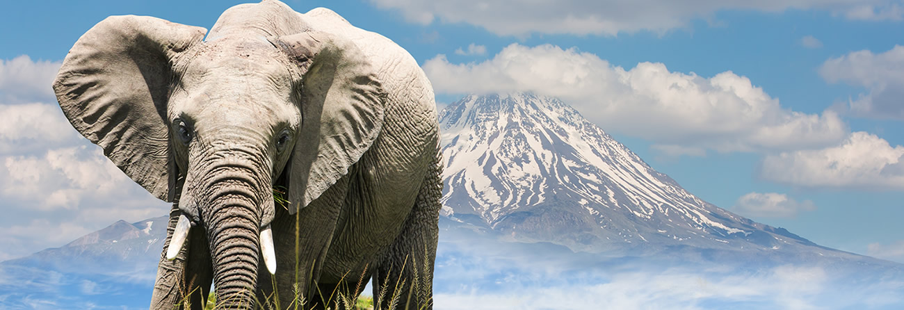Fly Safarilink Kilimanjaro