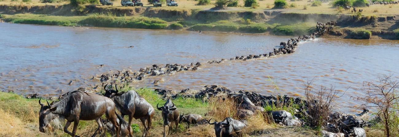 Fly Safarilink masaimara
