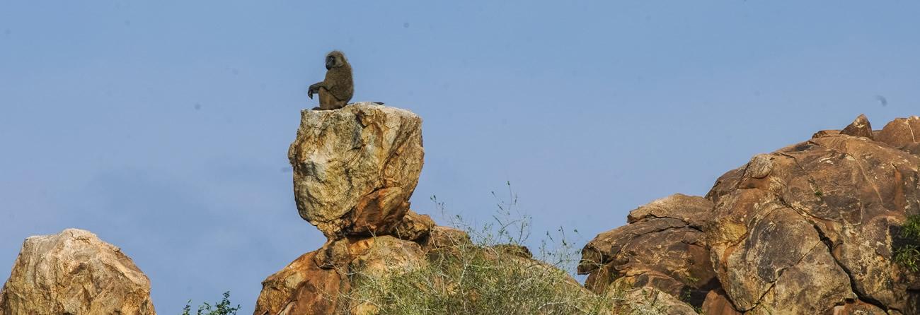 Fly Safarilink samburu