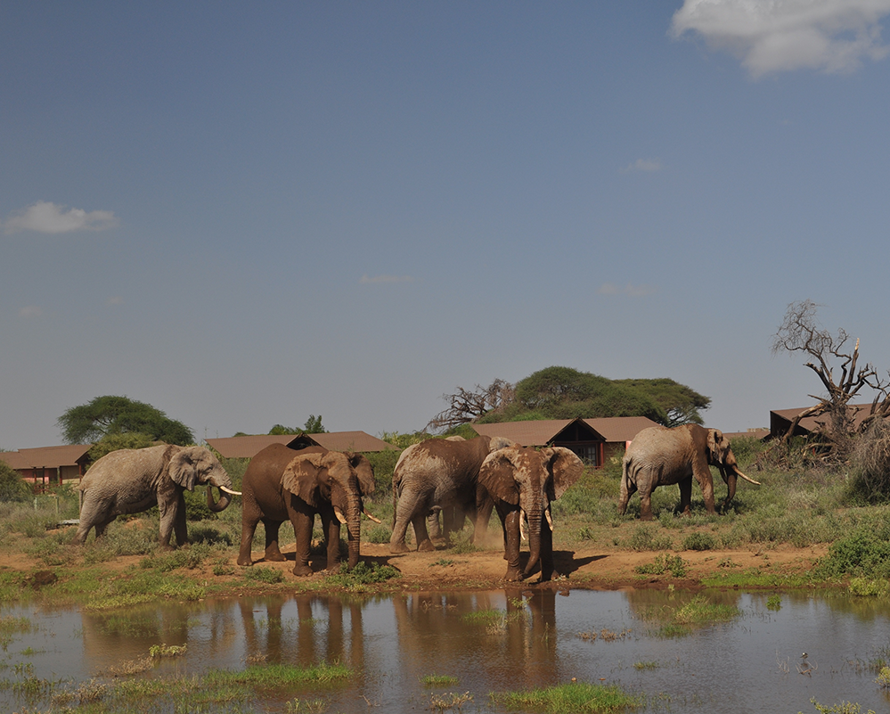 Safarilink-2 nights Kilima Safari Camp Flying package- Amboseli