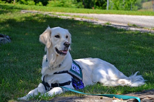 servicedog1