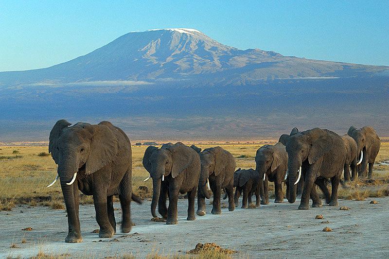 Flights to Amboseli | Cheap flights to Amboseli | Fly Amboseli