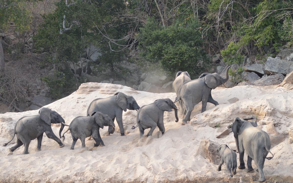 Elephants at Stiegler's