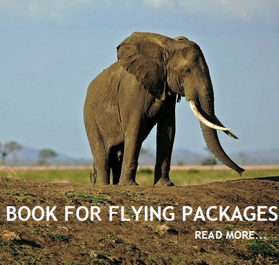 FLYING PACKAGES(1).png
