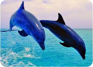 dolphin(1).jpg